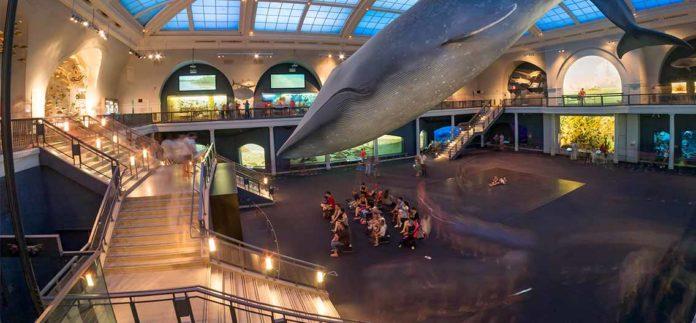 Americké muzeum přírodní historie New Yorku