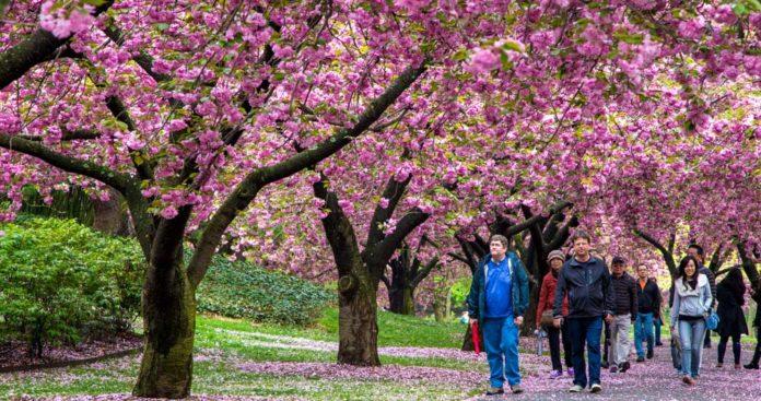 Počasí v New Yorku - květen