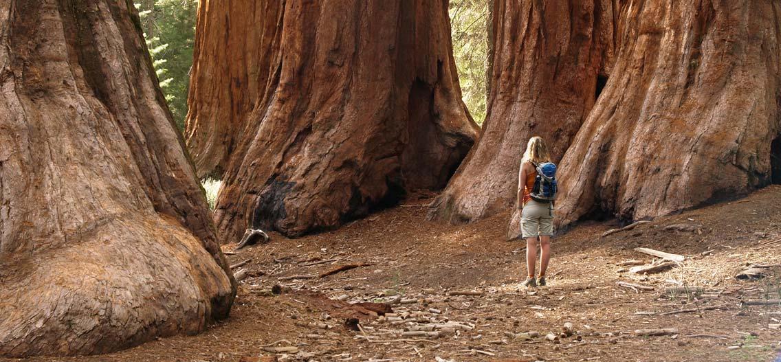 Sequoia národní park