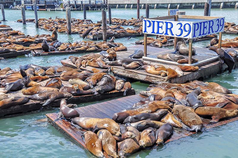 San Francisco - Lachtani na Pier 39