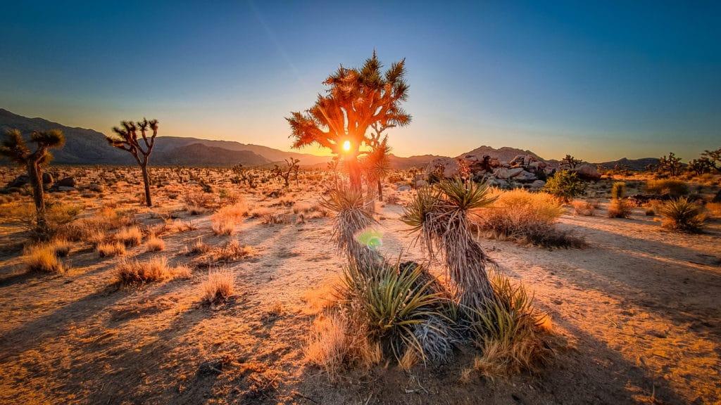 Park Joshua Tree při západu slunce